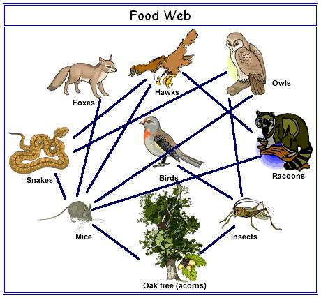 Food Web on diagram